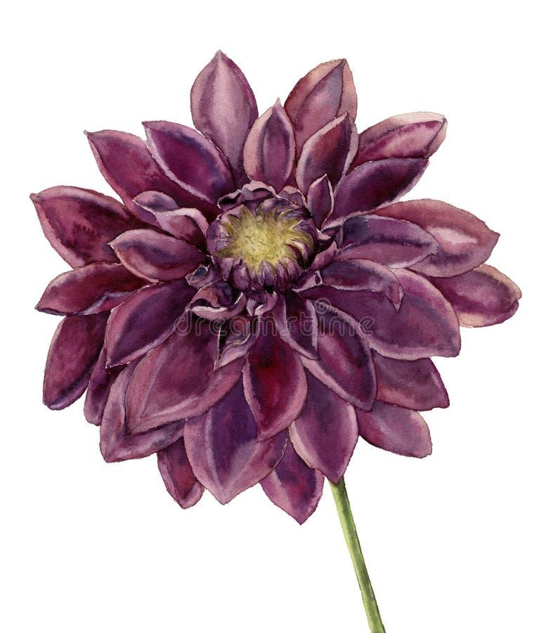 De bloem van de waterverfdahlia Hand geschilderde de herfst bloemendieillustratie op witte achtergrond wordt geïsoleerd Botanisch royalty-vrije illustratie