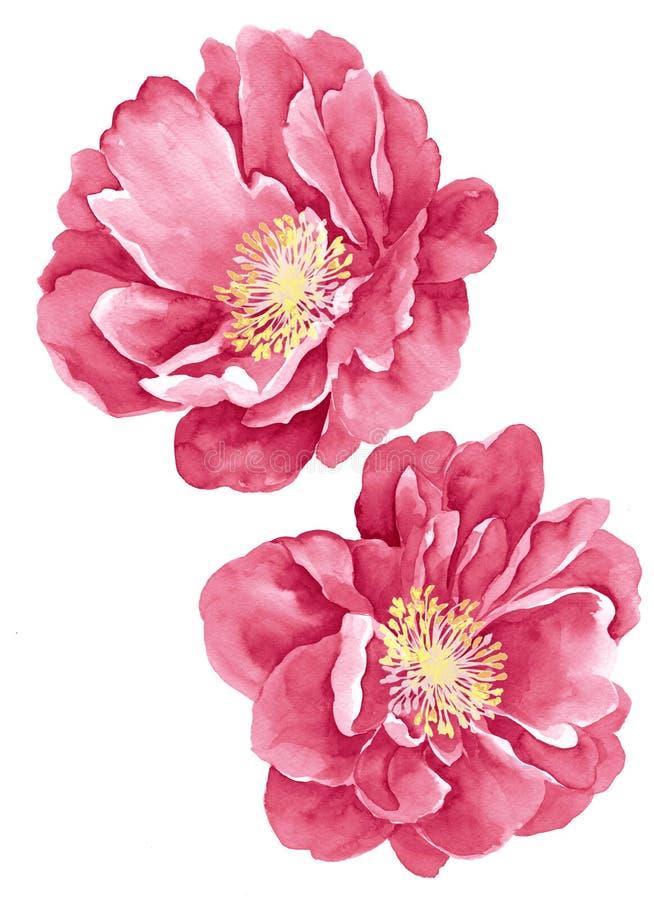 De bloem van de waterverfillustratie stock afbeelding