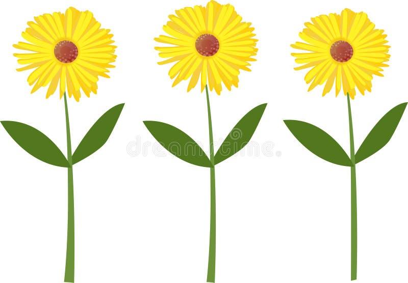 De bloem van de zomer royalty-vrije illustratie
