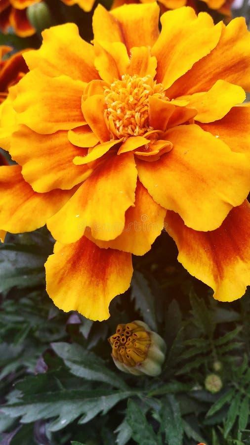 De bloem van de zomer royalty-vrije stock foto's