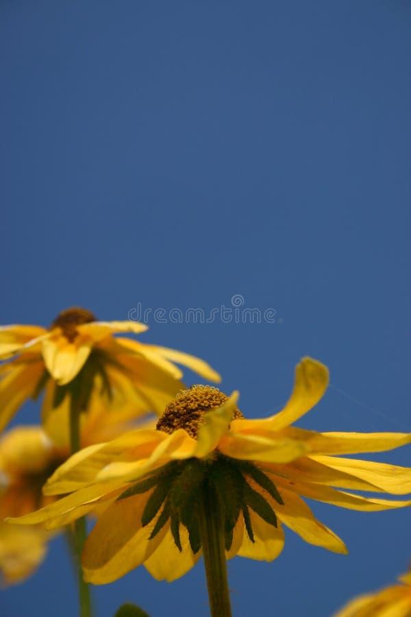De Bloem van de zon - de Mening van een Insect royalty-vrije stock afbeelding
