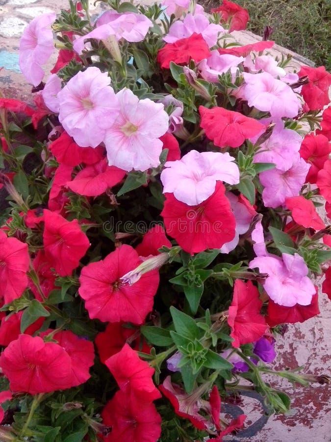 In de bloem van de de fotozomer van het stadspark royalty-vrije stock afbeelding