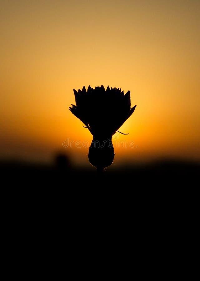 De bloem van het gebied stock fotografie