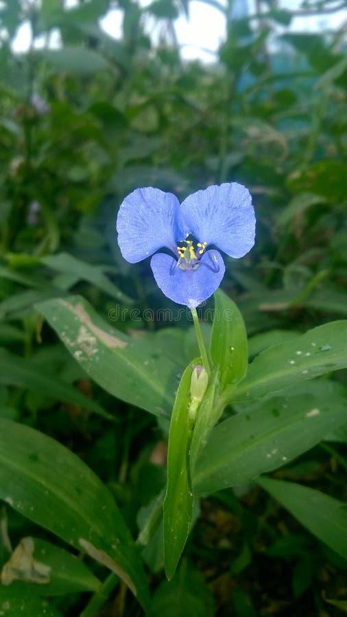 De bloem van het gras stock afbeeldingen