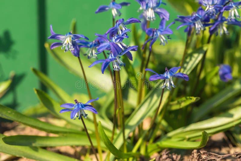 De bloem van het klokje in de aard Sluit omhoog, macro De achtergrond is onduidelijk royalty-vrije stock fotografie