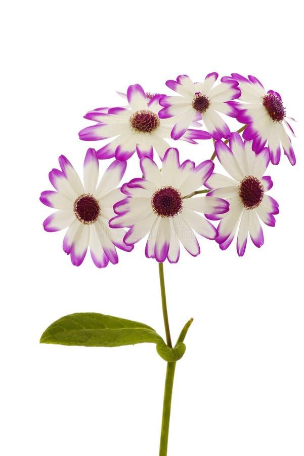 De bloem van het onkruid stock afbeeldingen