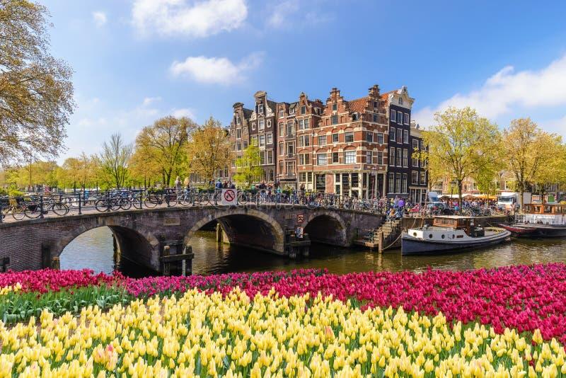 De bloem van de de lentetulp van Amsterdam, Nederland stock foto's