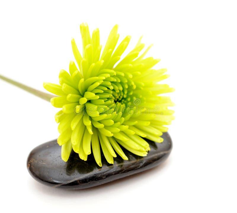 Download De bloem van Mum stock foto. Afbeelding bestaande uit bladeren - 29511150