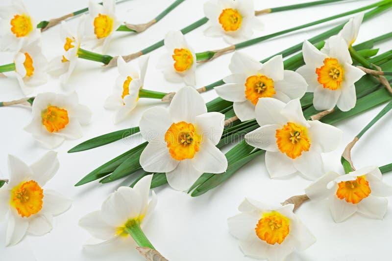 De bloem van de narcissenlente op wit royalty-vrije stock fotografie