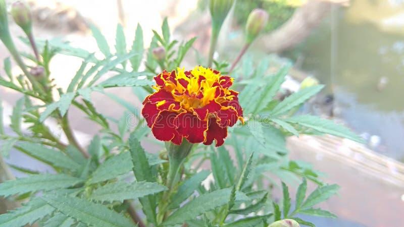 De bloem van Nice stock fotografie