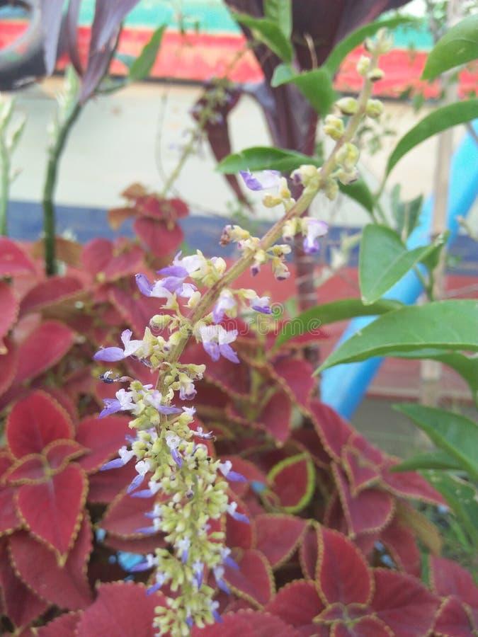 De bloem van Nice stock afbeelding