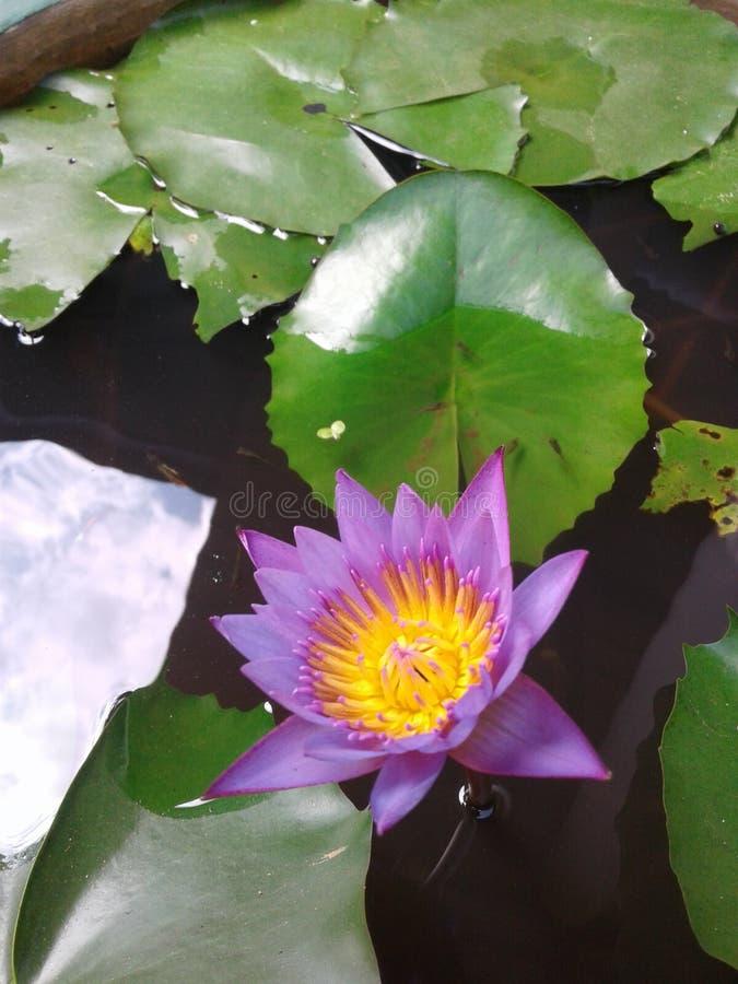 De bloem van nulmanel royalty-vrije stock foto's