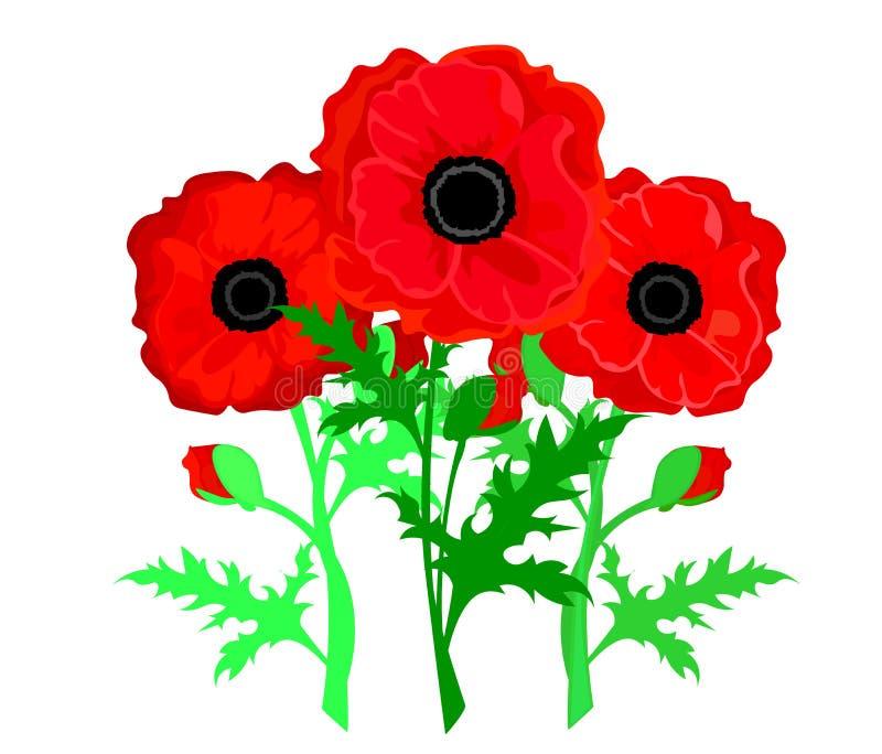 De bloem van de papaver Rode die papavers op witte achtergrond worden geïsoleerdc vector illustratie