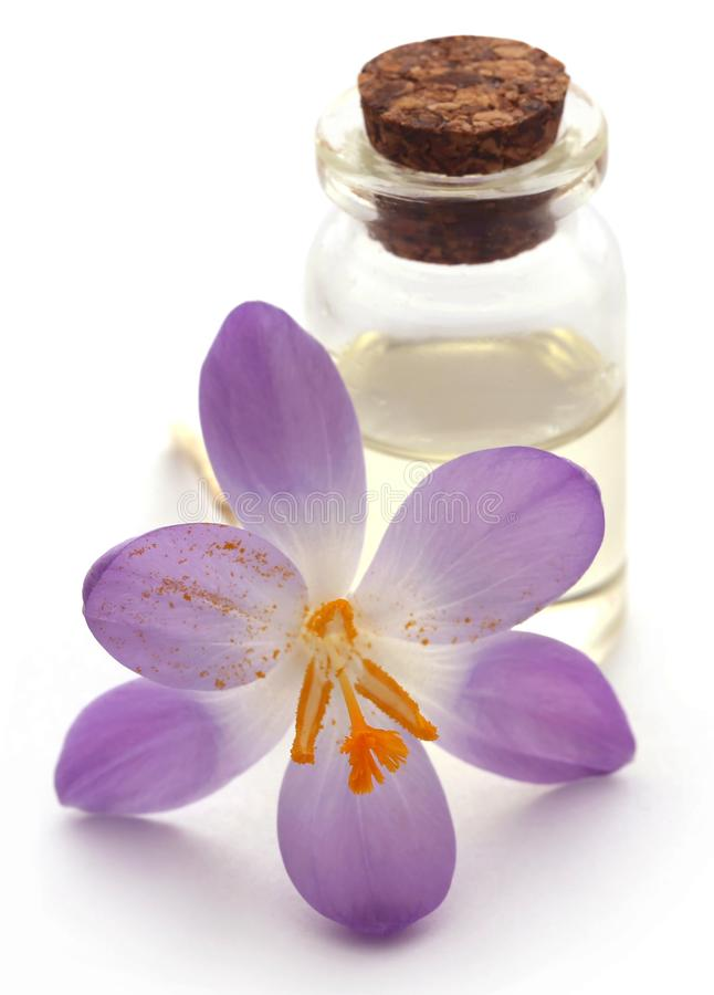 De bloem van de saffraankrokus met uittreksel royalty-vrije stock fotografie