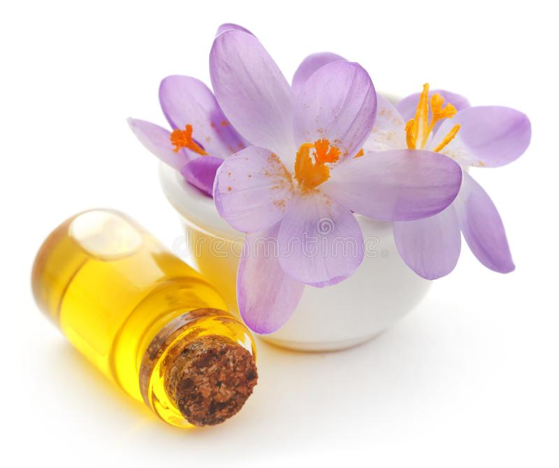 De bloem van de saffraankrokus met uittreksel stock foto