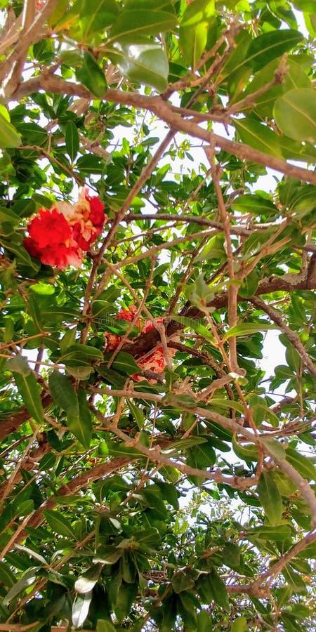 De bloem van de zomer royalty-vrije stock foto