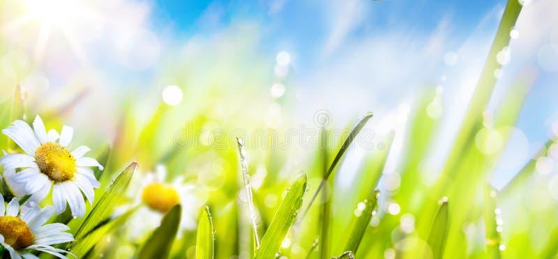 De bloemachtergrond van de de lentezomer; vers gras op zonhemel stock foto's