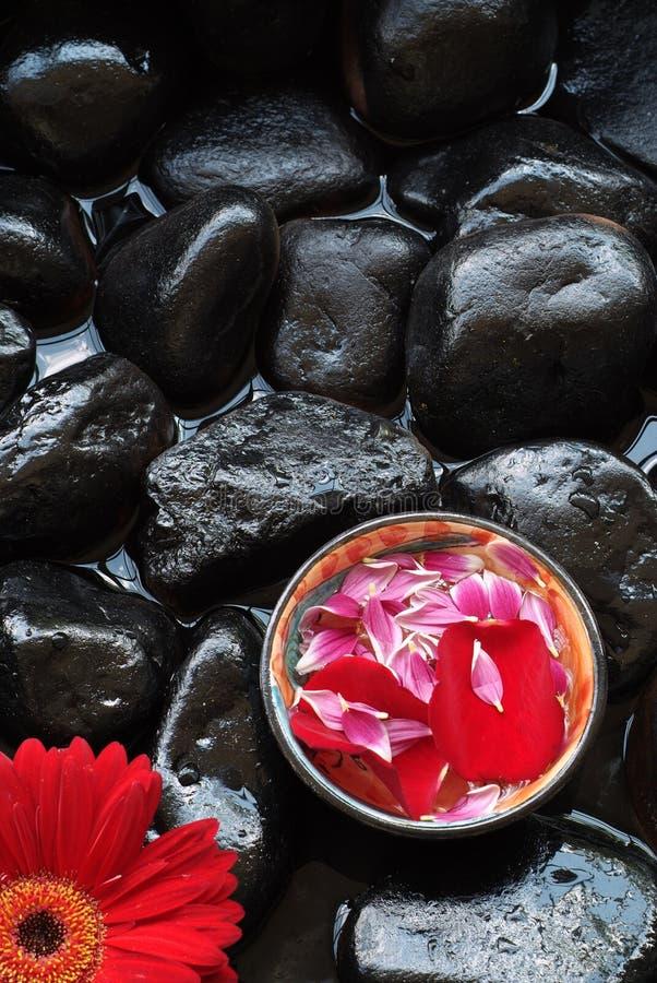 De bloemblaadjes en gerber het madeliefje van Aromatherapy stock afbeeldingen