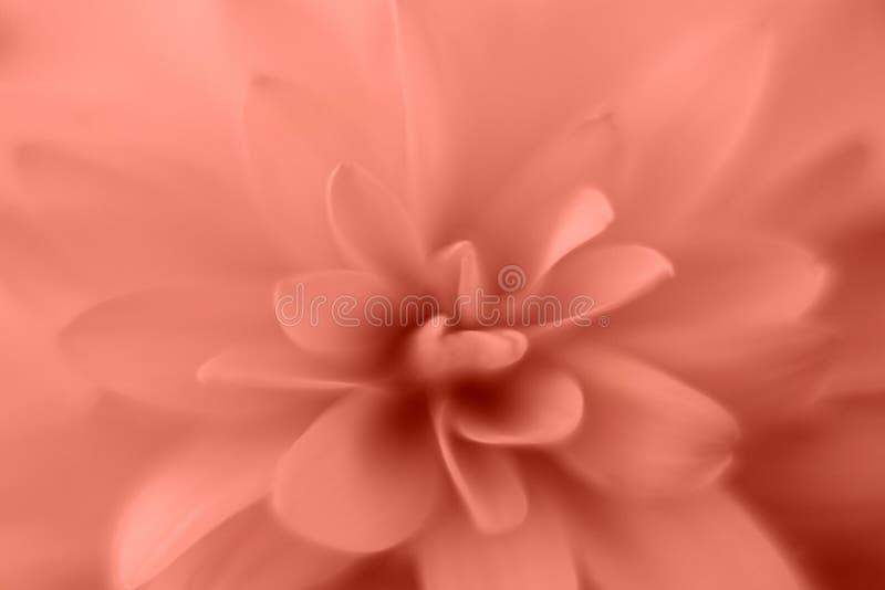 De bloembloemblaadjes sluiten omhoog macrofotografie Botanische bloemachtergrond royalty-vrije stock foto