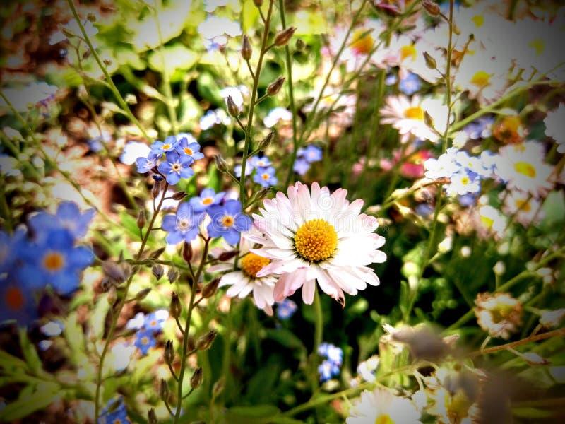 De bloemen royalty-vrije stock foto