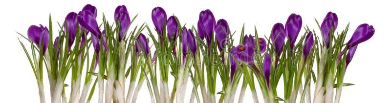 De bloemen die van de lente omhoog komen stock foto's
