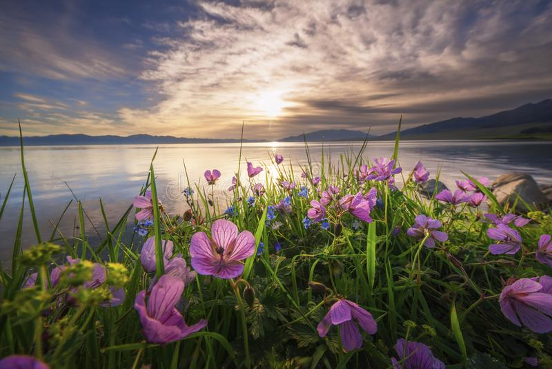 De bloemen door de rivier stock fotografie