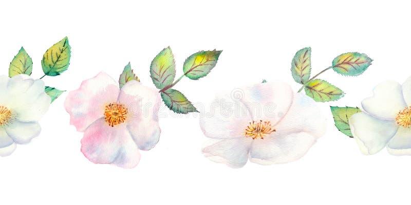 De bloemen en de bladeren van wildernis namen toe Herhaling van de zomer horizontale grens Bloemen waterverfillustratie Samenstel stock illustratie