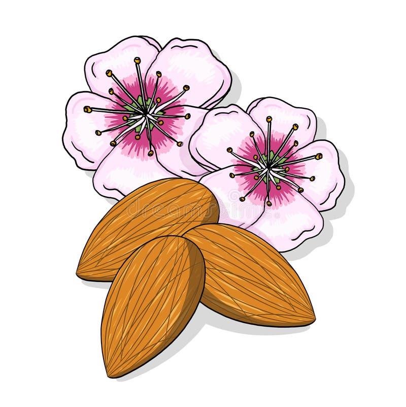 De Bloemen En De Notenillustratie Van De Amandel Royalty-vrije Stock Afbeeldingen