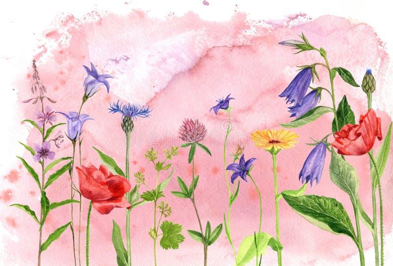De bloemen en de installaties van de waterverftekening stock illustratie