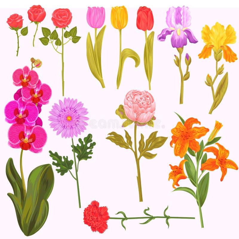 De bloemen en de bloemen vectorwaterverf bloeiden de uitnodiging van de groetkaart voor de de bloeiende iris of orchidee van de h stock illustratie