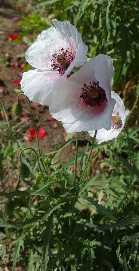 De bloemen glanzen in het ochtendmirakel van zon royalty-vrije stock afbeeldingen