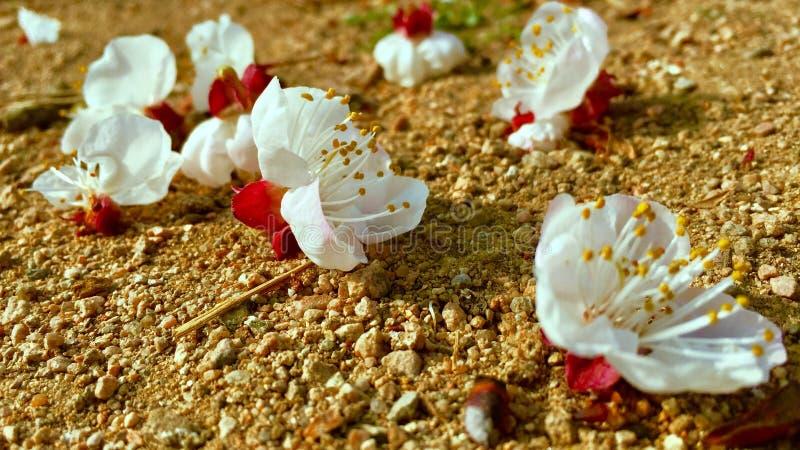 De bloemen in de lente stock foto