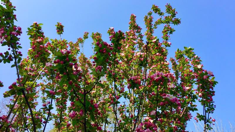 De bloemen in de lente royalty-vrije stock afbeeldingen