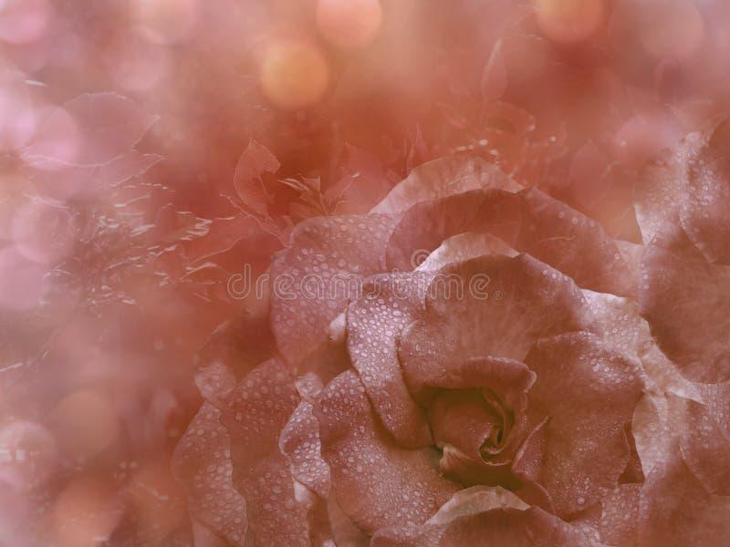 De bloemen lichtrode achtergrond van nam toe Bloemensamenstelling Een bloem van een rood nam op een transparante blauwe achtergro royalty-vrije stock fotografie