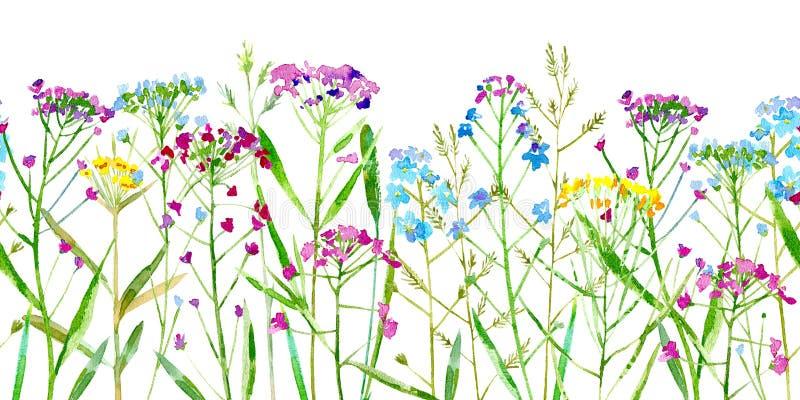 De bloemen naadloze grens van een wildernis bloeit en kruiden op een witte achtergrond