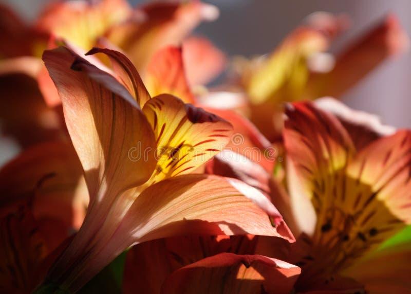 De bloemen nodigen de vroege ochtendzon uit stock foto's