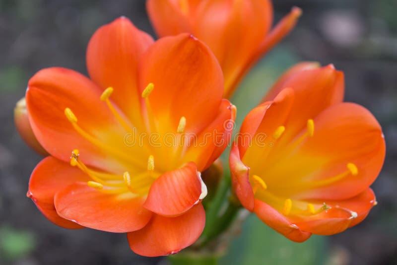 De bloemen op succulent stock foto's