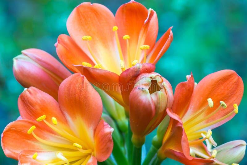 De bloemen op succulent royalty-vrije stock afbeelding