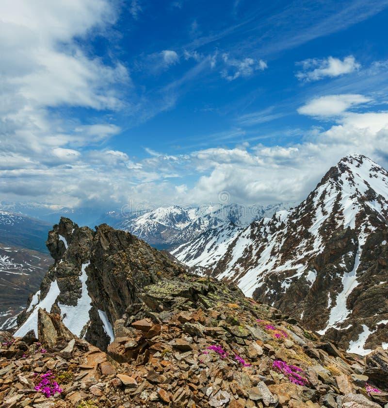 De bloemen van de alp over bergafgrond en wolken royalty-vrije stock foto