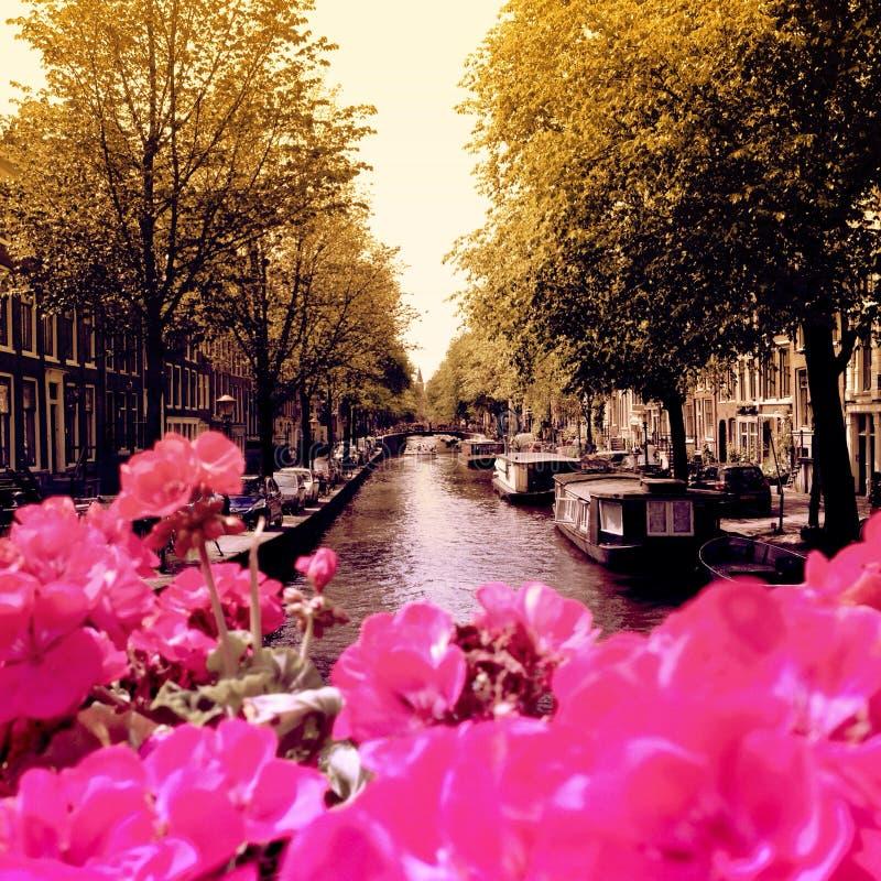 De bloemen van Amsterdam stock afbeeldingen