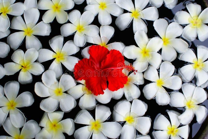 De bloemen van Bali royalty-vrije stock afbeelding