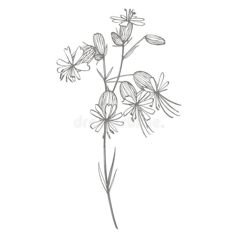 De bloemen van de blaaskoekoeksbloem Reeks tekeningskorenbloemen, bloemenelementen, hand getrokken botanische illustratie Goed vo royalty-vrije illustratie