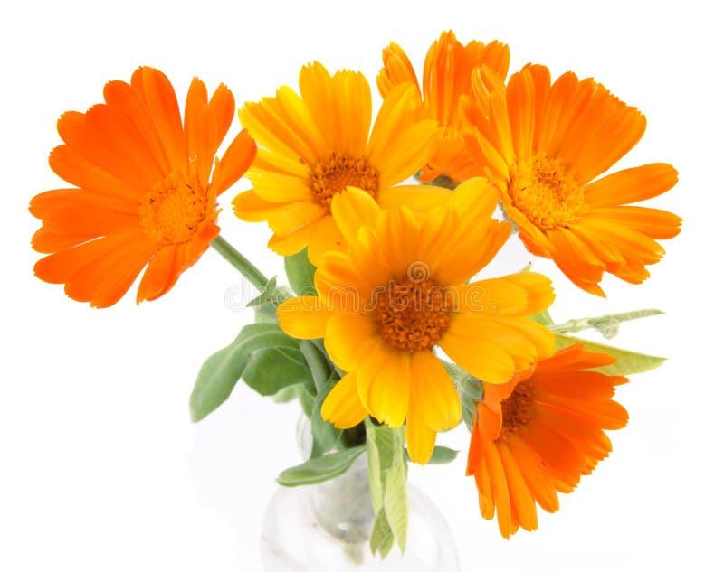 De bloemen van calendula royalty-vrije stock afbeelding