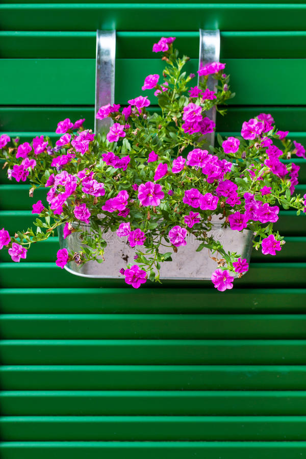 De bloemen van Calibrachoa stock foto's