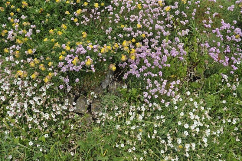 De bloemen van Clifftop royalty-vrije stock afbeeldingen