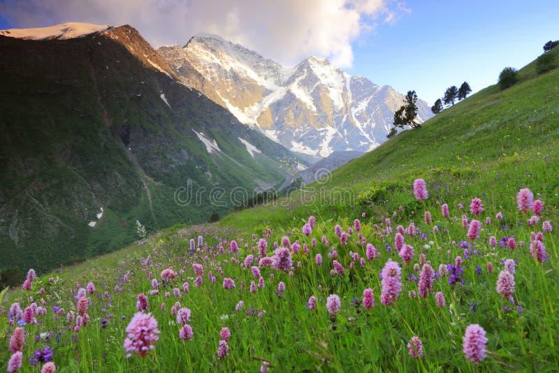 De bloemen van de berg stock fotografie
