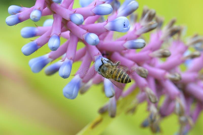 De bloemen van de bijenzwerm en kleine insecten op de bij royalty-vrije stock fotografie