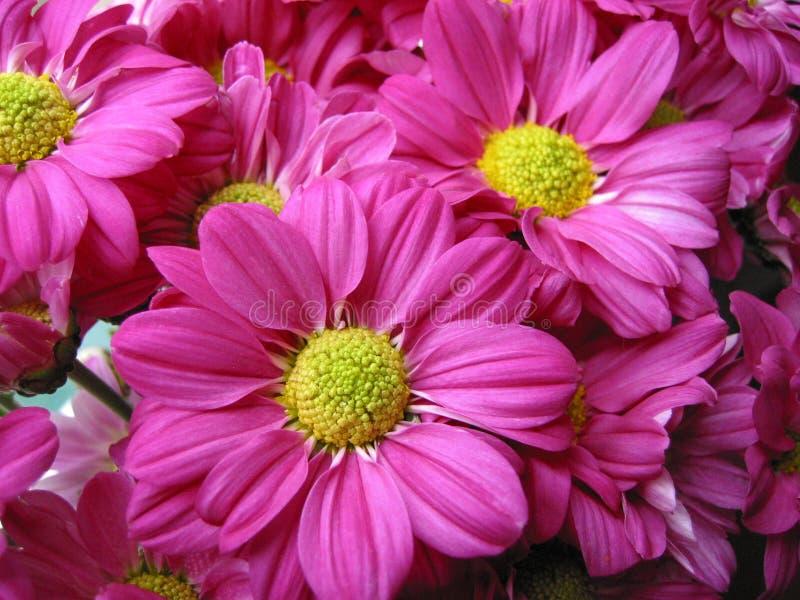 De bloemen van de bloesem stock afbeeldingen