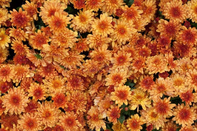 De bloemen van de herfst stock foto