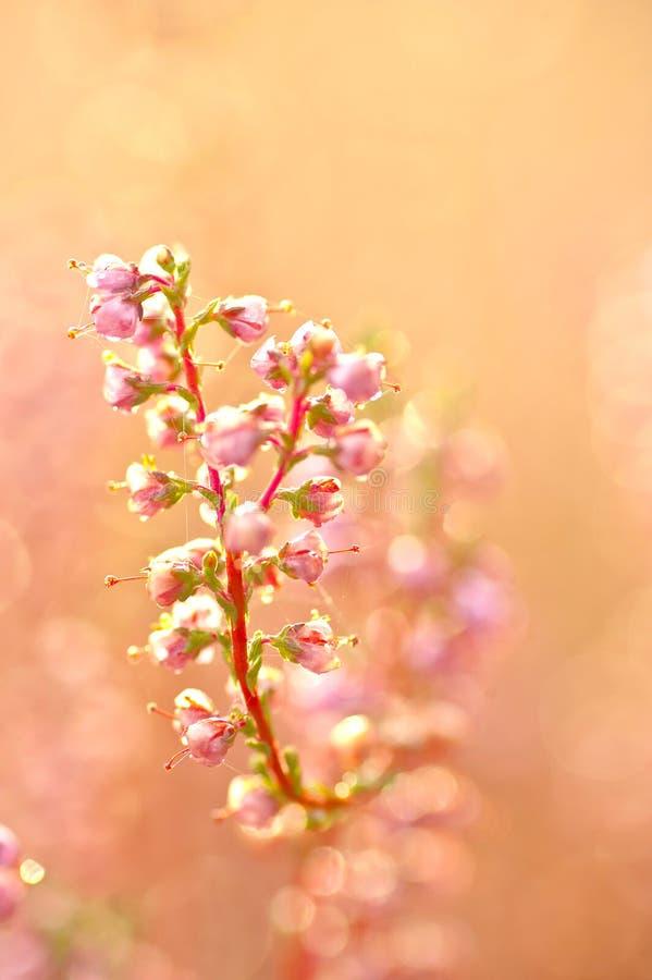 De Bloemen Van De Herfst Stock Afbeelding